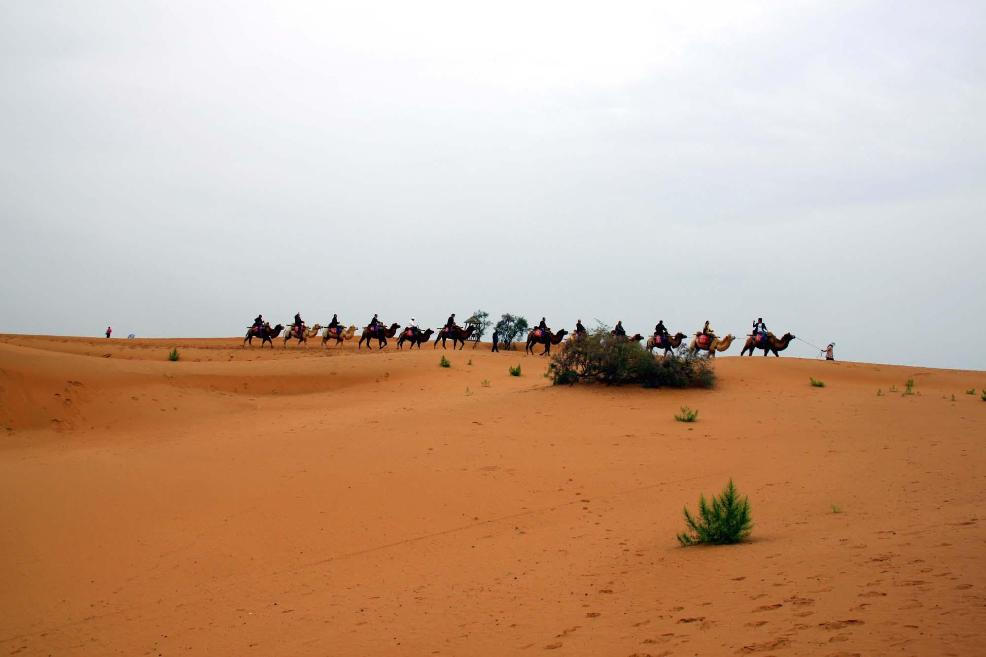 宁夏秋深沙与水的和谐典范沙坡头 都说游宁夏主要就是看两次沙。沙湖俺们昨天就看过了,今天俺们看第二沙沙坡头。其实俺很早就听说过沙坡头了,因为这个地名经常出现在各种科普文章和视频中。沙坡头的遐迩闻名是与世界上第一条全年全天候通车的沙漠铁路包兰铁路紧密相联的。 包兰铁路途经沙坡头的腾格里沙漠南缘,腾格里沙漠是中国第四大沙漠。为了确保铁路在通过沙漠时安全顺畅,中国人从铁路一开通起就致力于与沙漠的抗争。这种抗争几乎没有任何胜算,但奇迹出现了,肆虐的沙漠被牢牢地锁住了,不管你信不信,这才是真的奇迹喔!