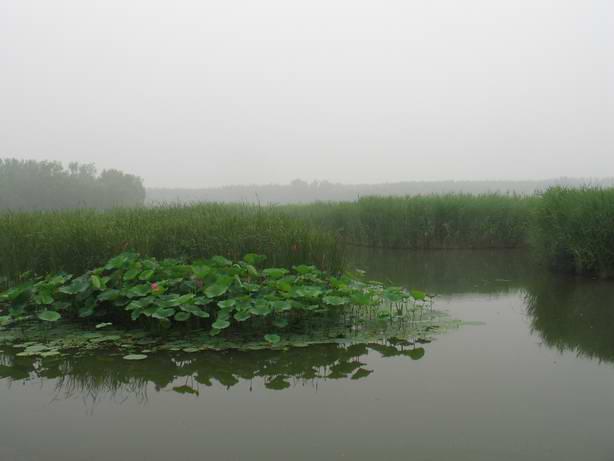 北京翠湖湿地公园