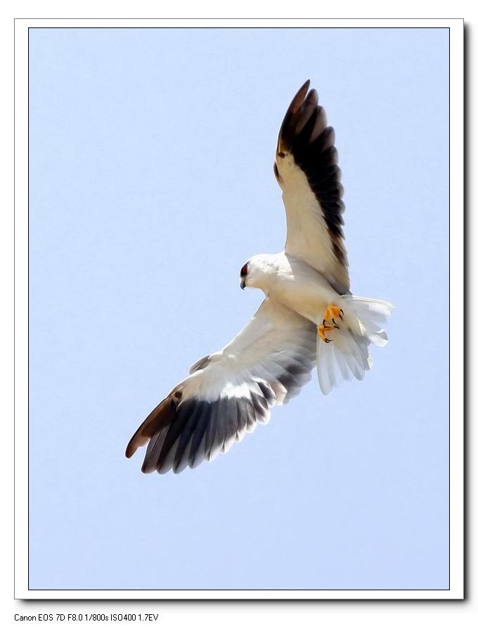 大雁是几级保护动物