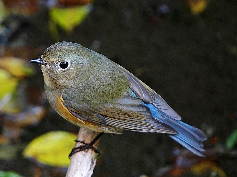 厦门常见鸟类100种图片第一辑 厦门观鸟
